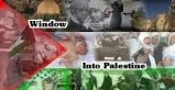 Window Into Palestine