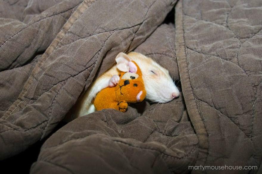rato bonito a dormir com boneco