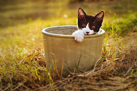 Cat in the Pot 1