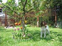 Lemon w ogrodzie