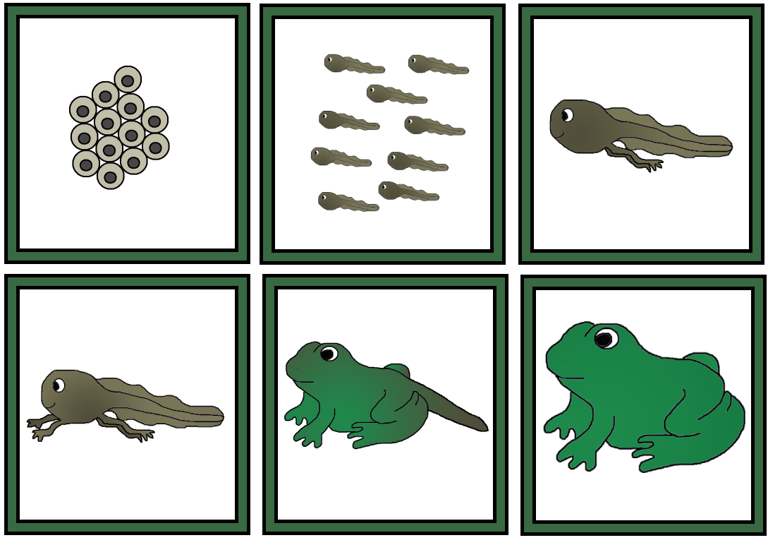 Uncategorized Life Cycle Of A Frog Worksheet a childs place frog sequence cards cards