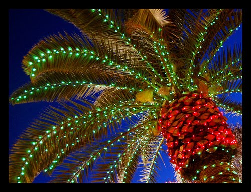 while it doesnt feel much like christmas the lighted palm trees to make for a festive show temperatures remain in the low 80s f 27 c across most of