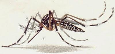 GMO Mosquito Trial