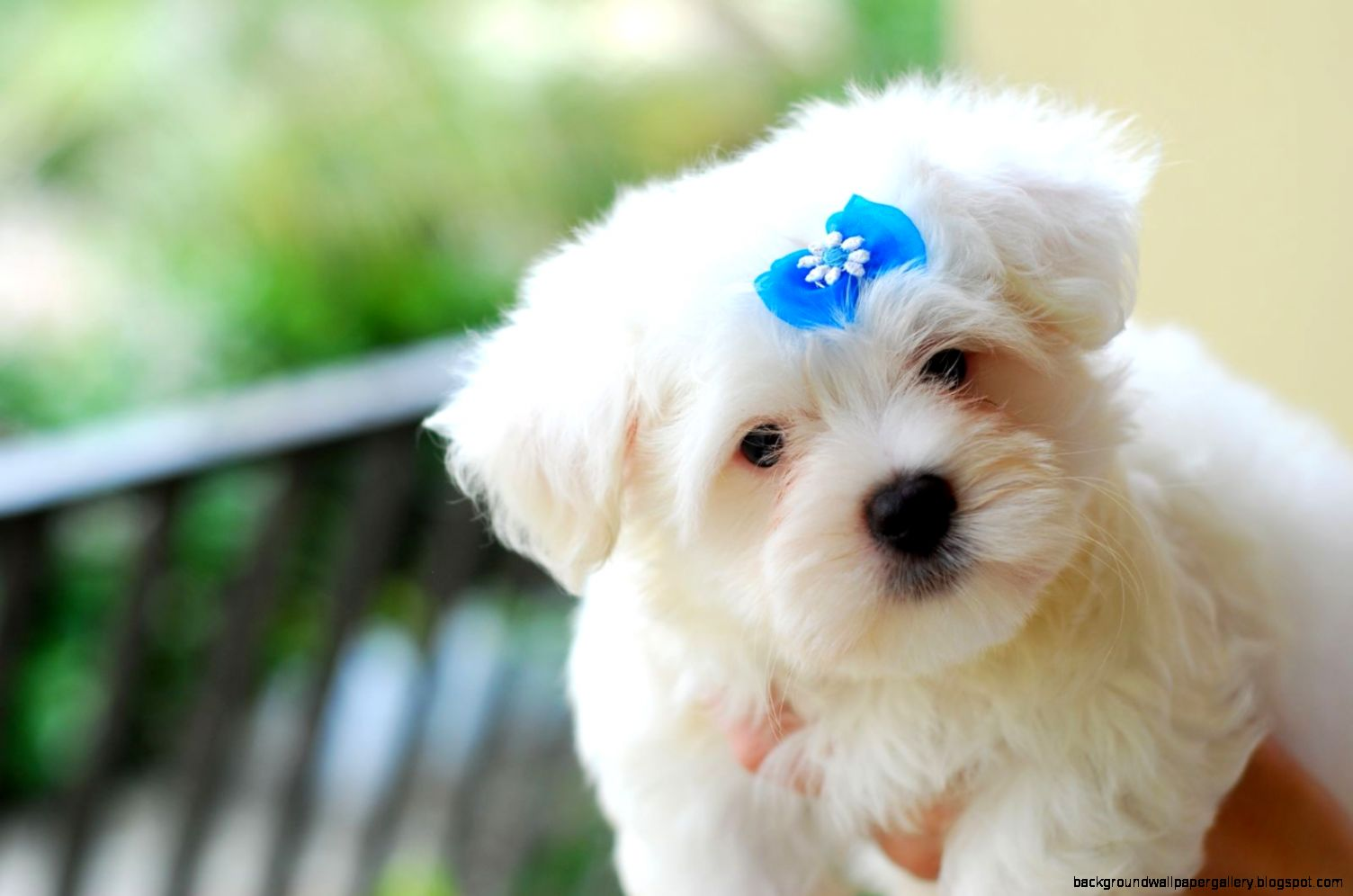 Cute Baby Love And Puppy Wallpaper