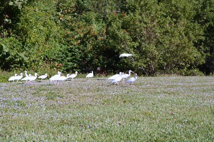 cranes in a field