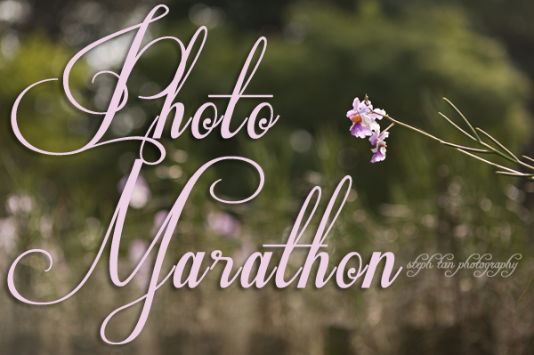 STP's anniversary photomarathon