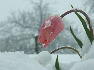 Fotos de flores en invierno - belleza