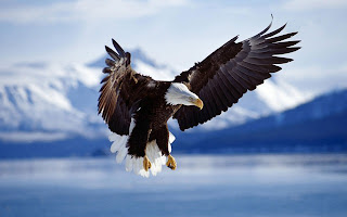 american eagle wallpaper