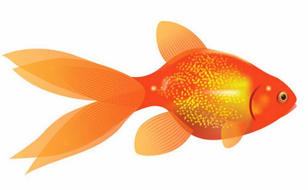 Create a Vector Goldfish in Six Steps