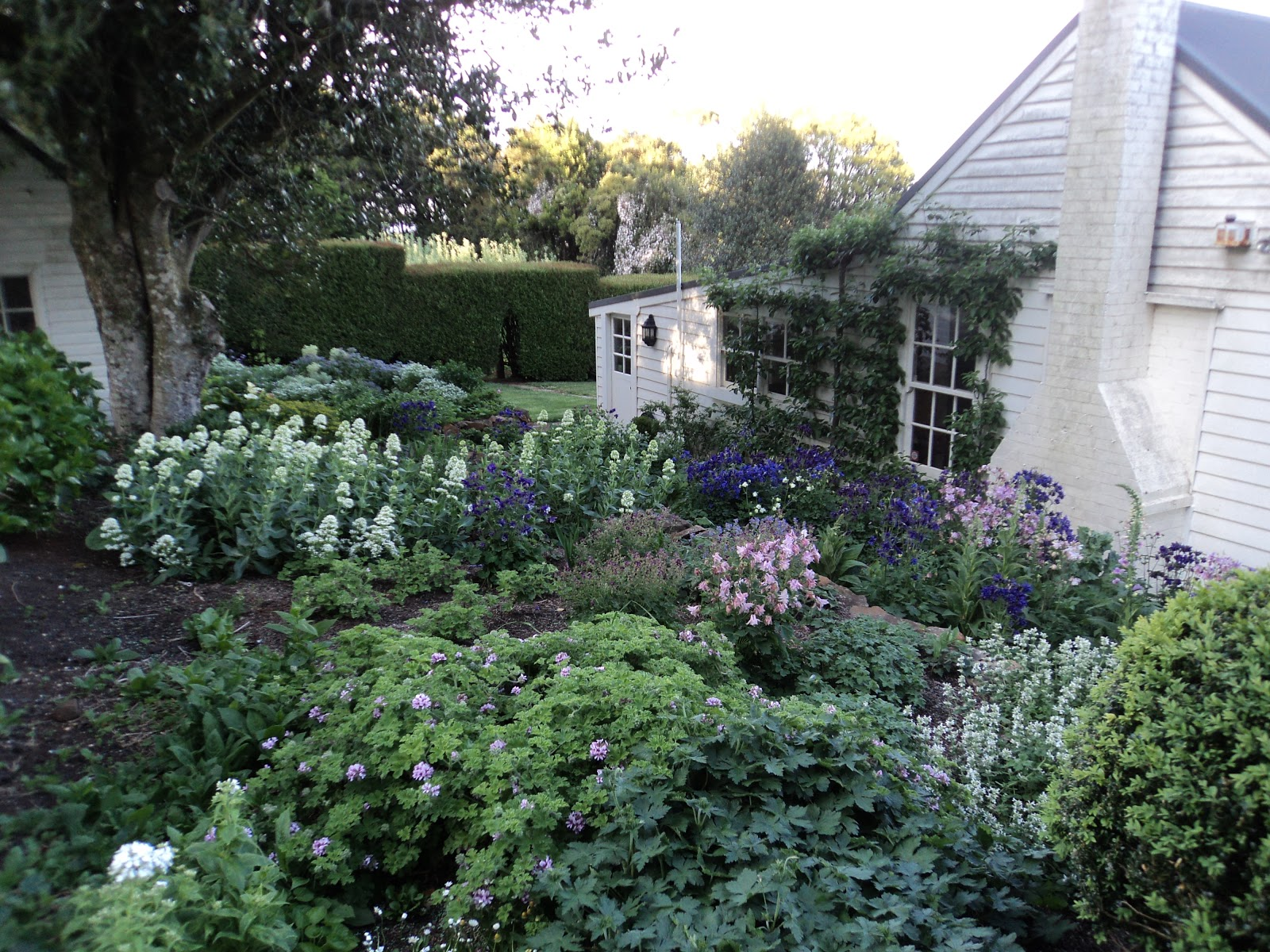 Bumble at home cottage garden for Cottage garden designs australia