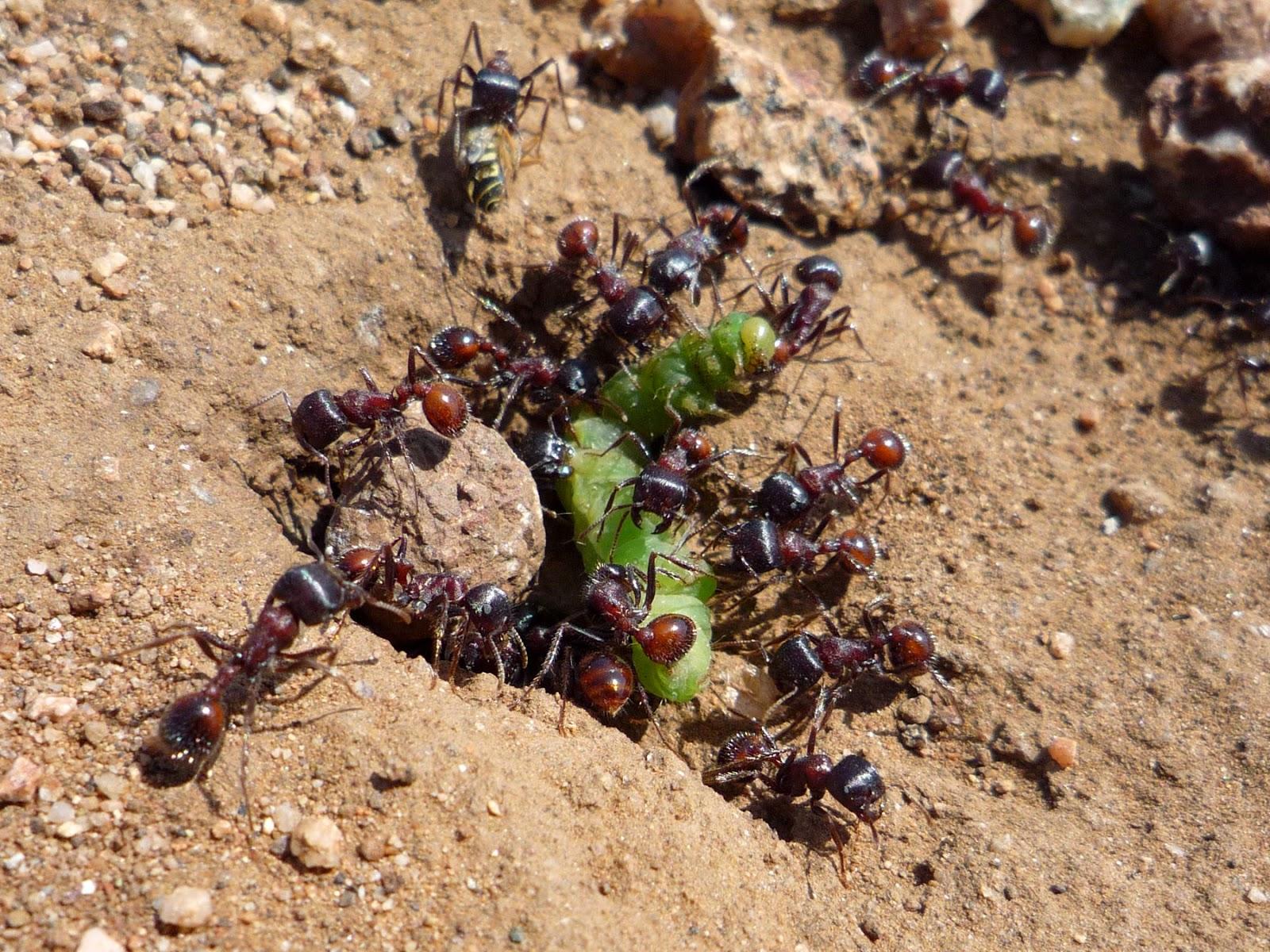 Bagaimana nak bunuh semut
