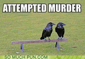 funny-puns-attempted-murder.jpg