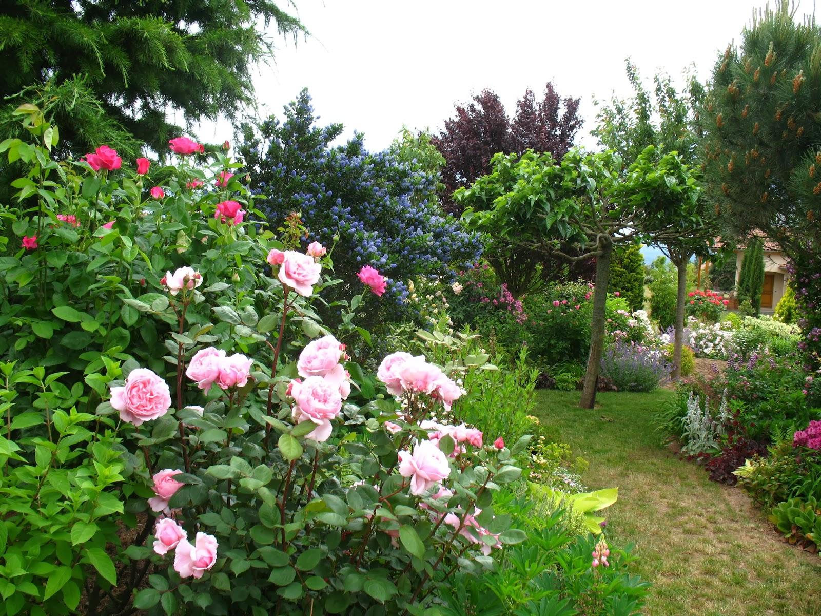 mon petit jardin en sologne commande chez p tales de roses. Black Bedroom Furniture Sets. Home Design Ideas