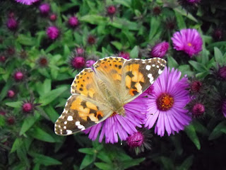 бабочка на сентябринках