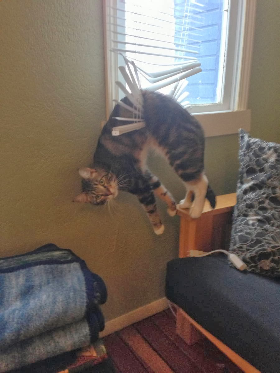Funny cats - part 90 (40 pics + 10 gifs), cat stuck on window blind