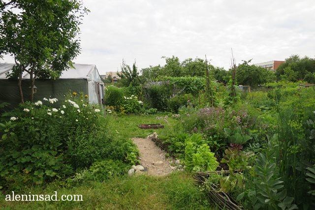 аленин сад, aleninsad, июль в саду, зелень в саду, овощи в июле, травы июля, опора-пирамида, фасоль, теплица, дорожка из камня, песка