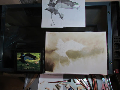 Bird Painting in pastel; work in progress by Colette Theriault