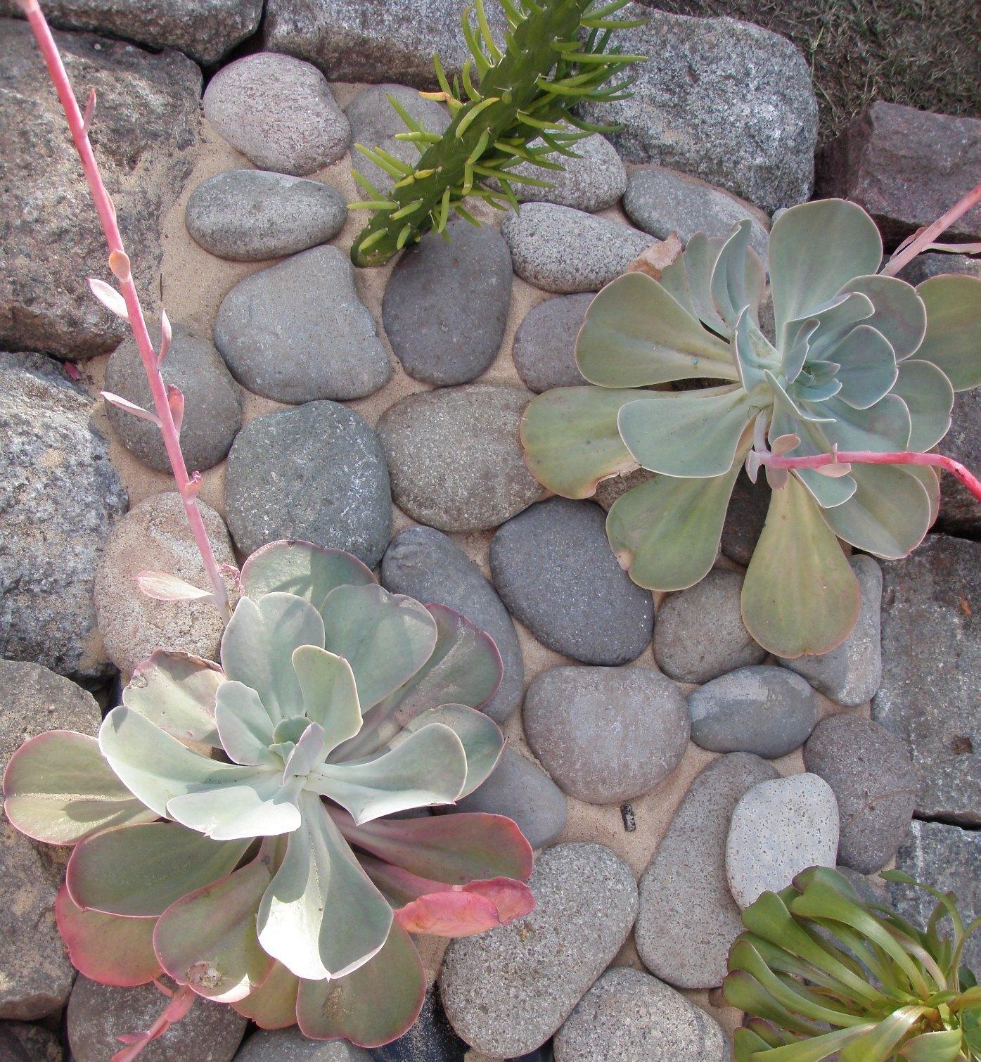 Jardines de cactus y suculentas paso a paso el hermoso - Jardines de cactus y suculentas ...