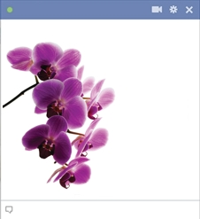 Orchid Emoticon Flower