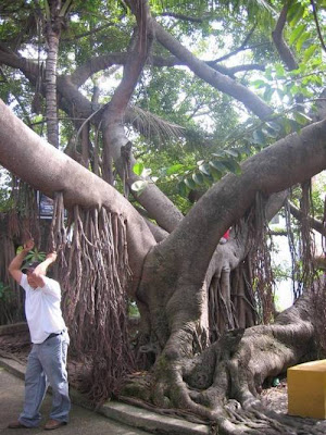 Amazing and Funny Trees