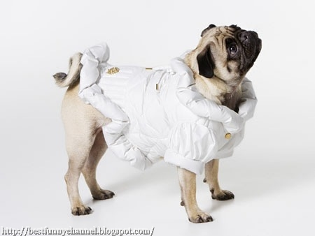 Funny puppy 3