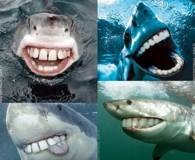 smiling sharks in water picture