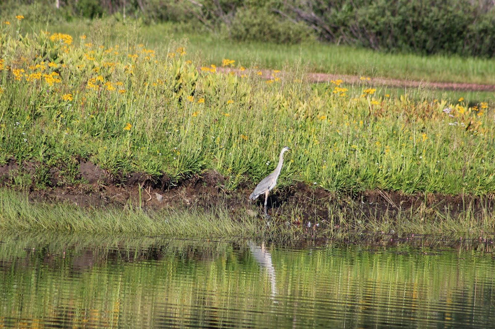 Fish creek for Ute lake fishing report