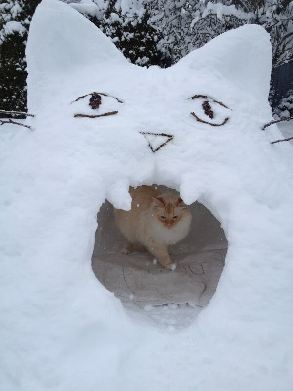 Funny cats - part 92 (40 pics + 10 gifs), cat inside cat shaped snow cave