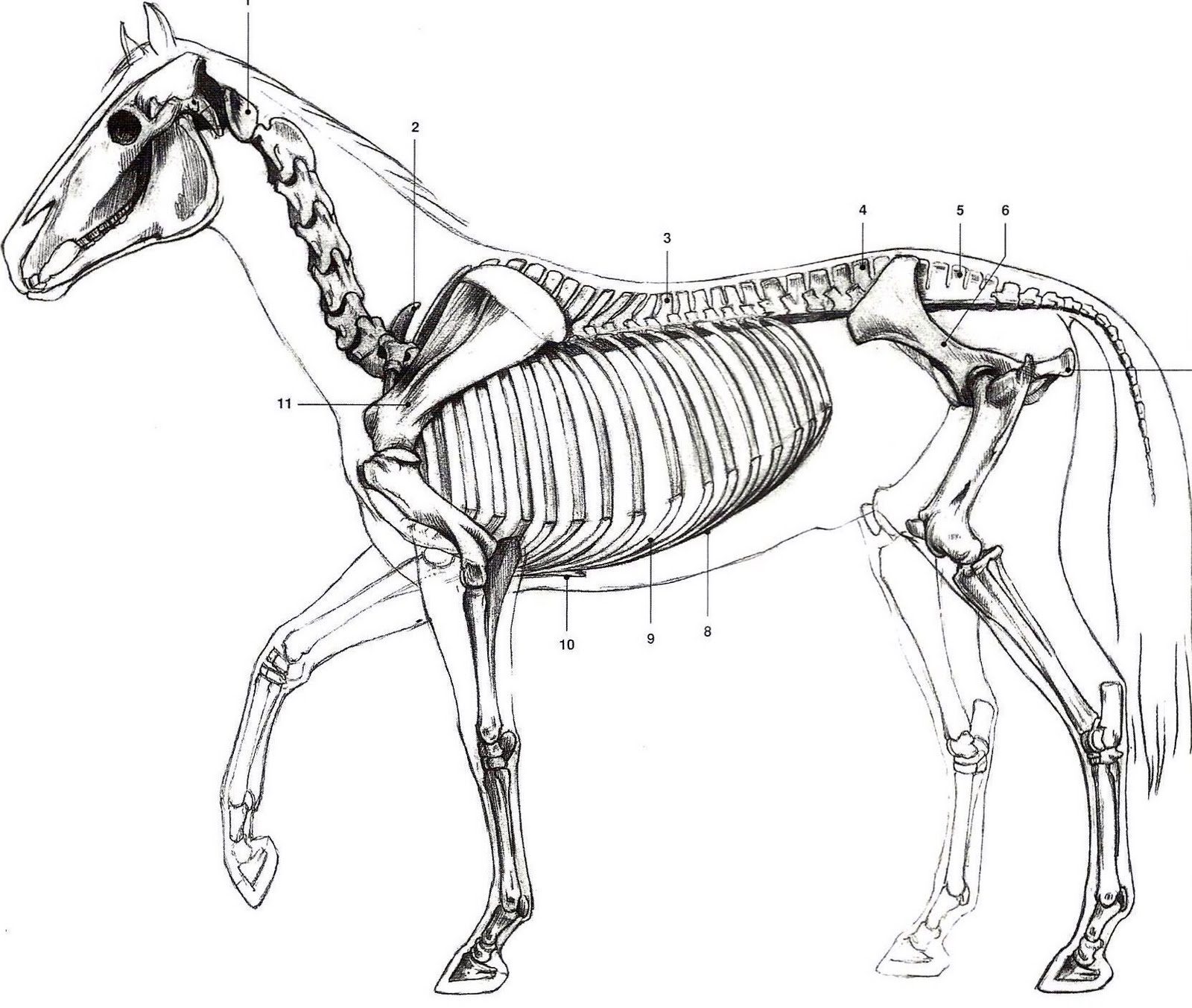 Clay To Bronze: Starting a Horse Armature