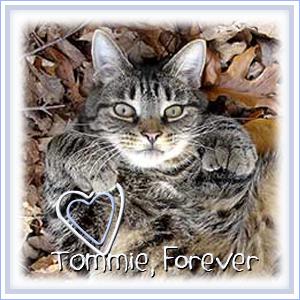 Run Free Tommie