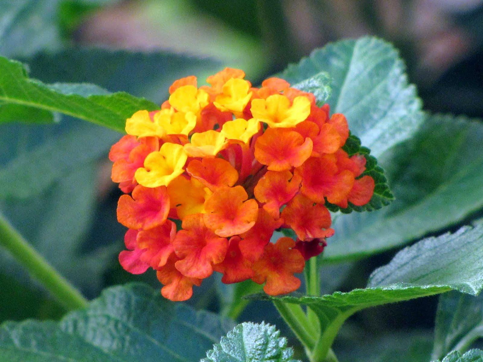 Warm Colored Flowers | Desert Colors