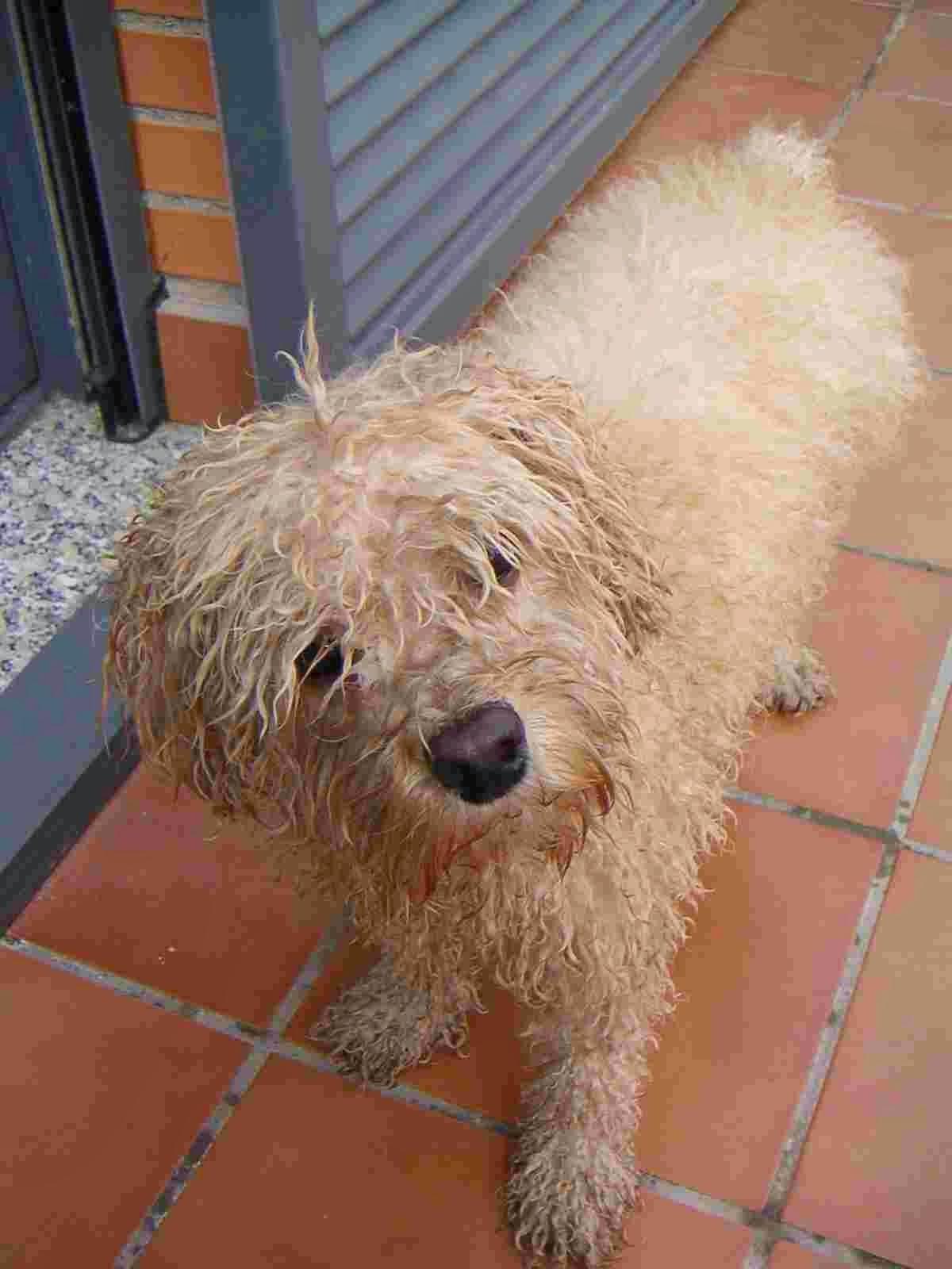 Porque Mi Baño Huele Feo:Qué agobio Manual de supervivencia en casa: Mascotas mantener la
