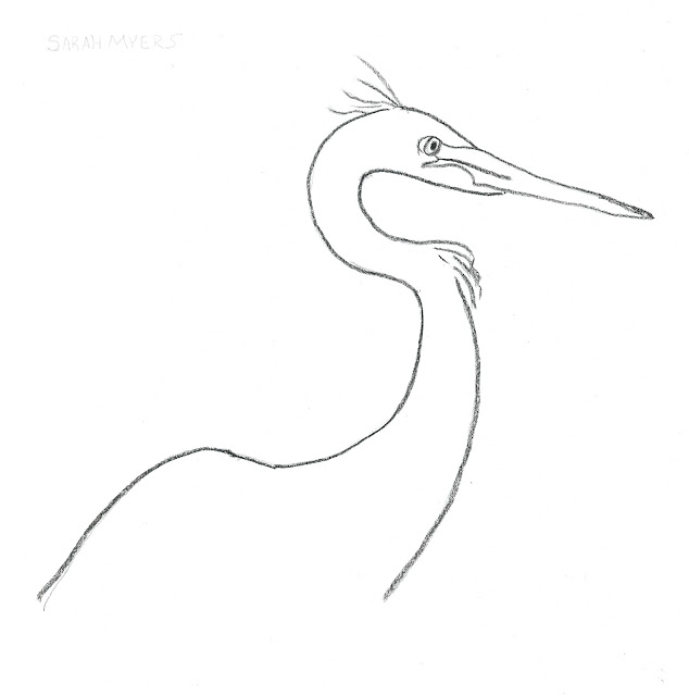 egret, bird, minimal, charcoal, art, drawing, study, animal, black, paper, arte, dibujo, nature, head, beak, simple,minimalist, minimalism, line, line-drawing, Sarah, Myers, artist, neck, pencil