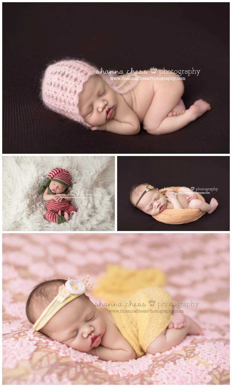 eugene and springfield oregon newborn photography