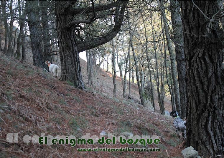 El enigma del bosque