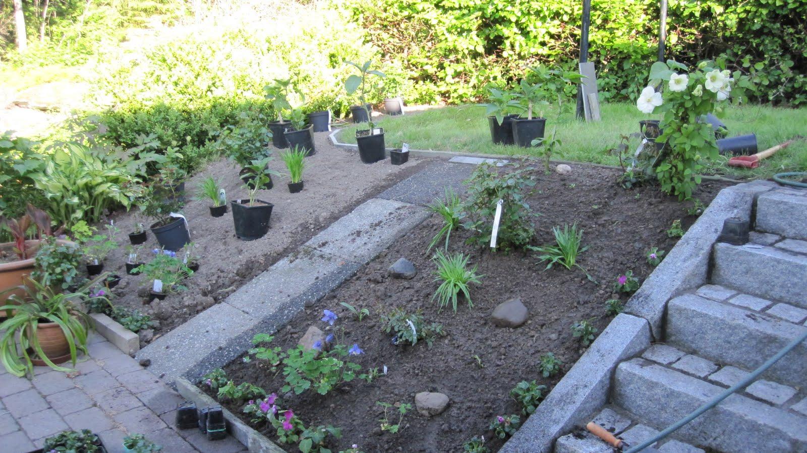 Hagen på Knatten: Ny rosehage i solsteika