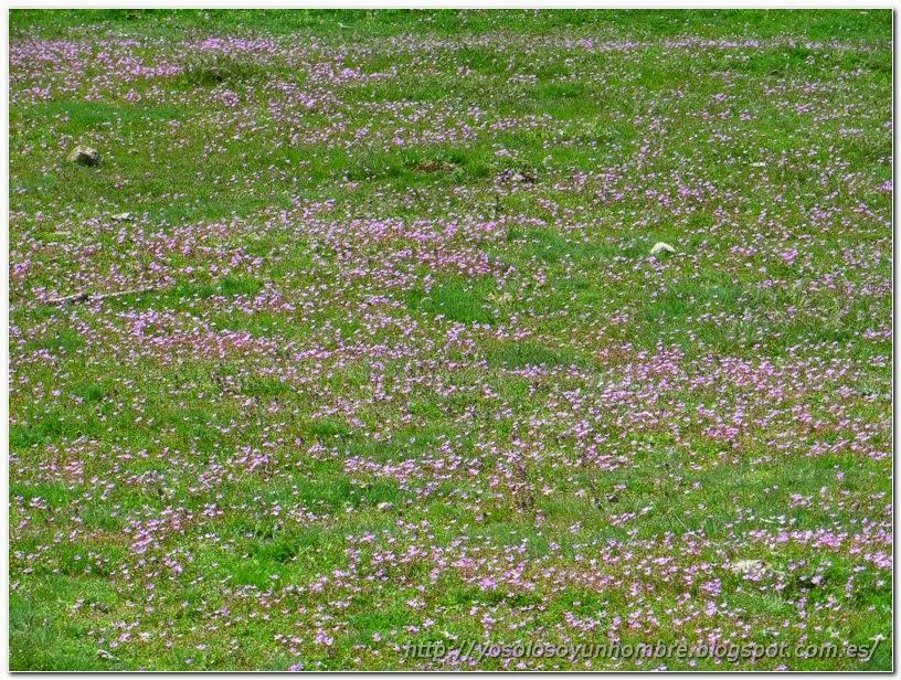 florecillas en el campo