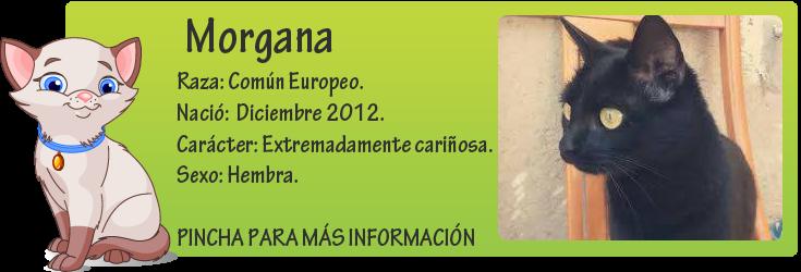 http://mirada-animal-toledo.blogspot.com.es/2013/11/morgana-una-pantarita-adorable.html