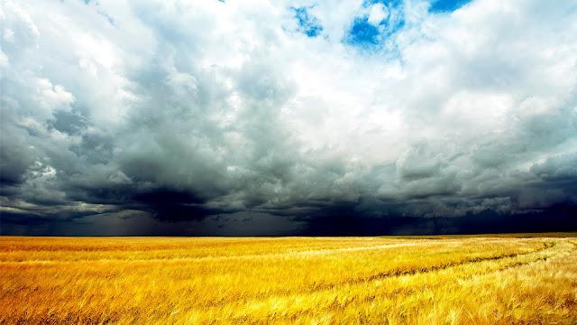 Golden Wheat Fields Clouds Sky Storm Coming HD Wallpaper