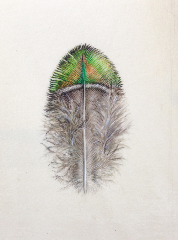 Peacock feather painting