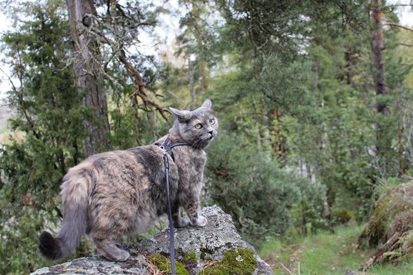 musta kissa Kristiinankaupunki