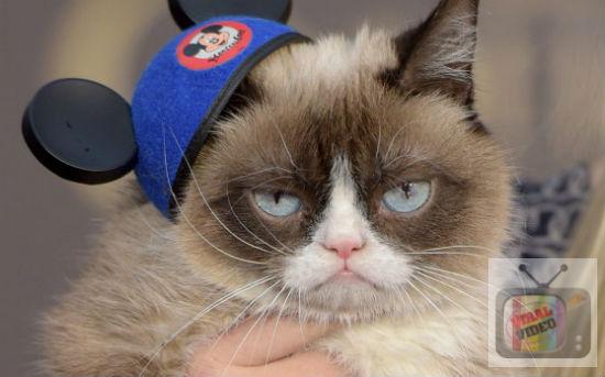 Video Grumpy Cat, Kucing Bengis Yang Bakal Menjadi Patung Lilin