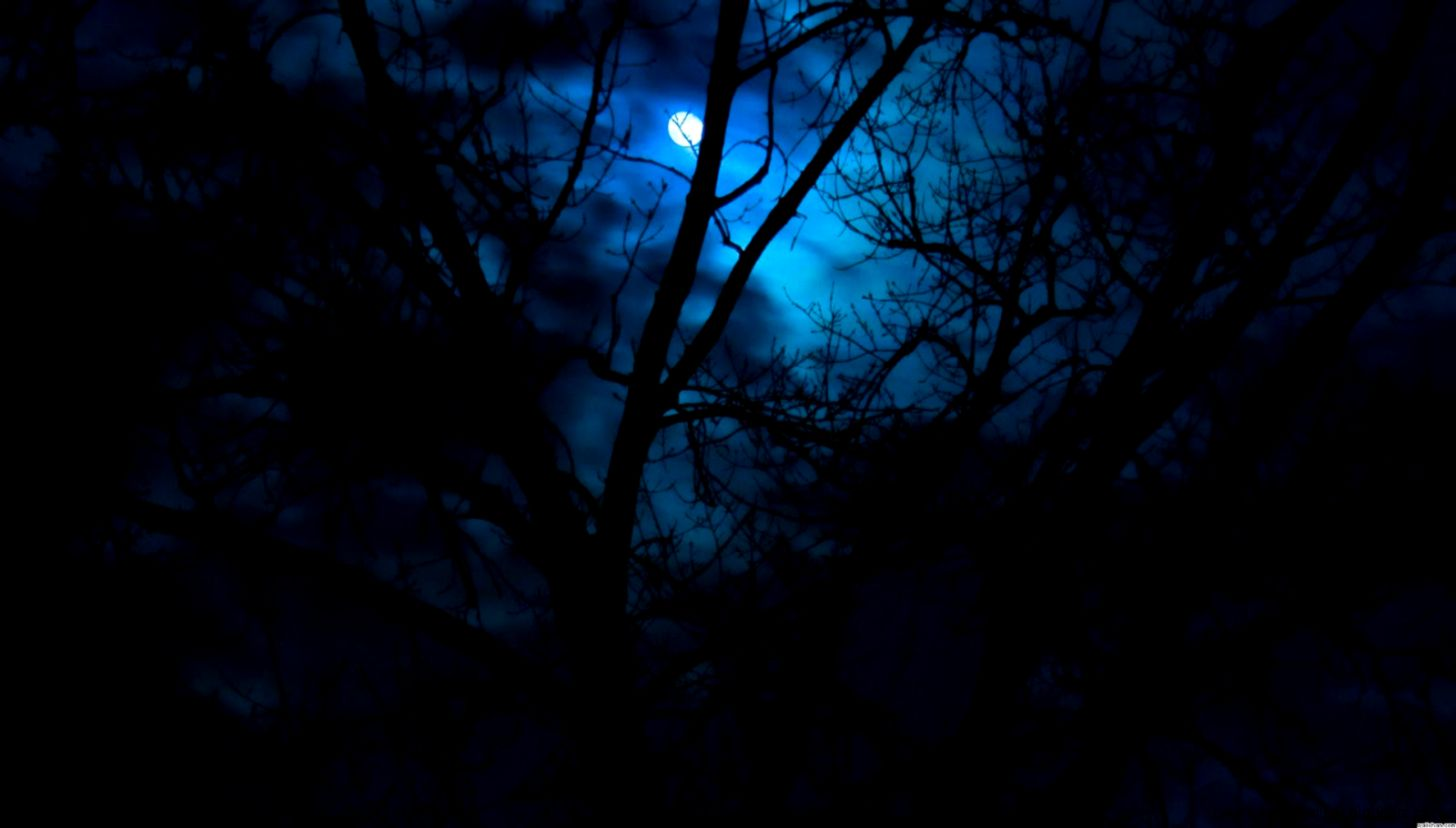 Beautiful Night Forest Wallpaper Size 1600x900