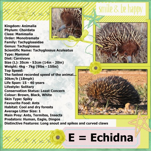 May 2016 - E = for Echidna