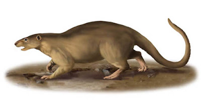 rodentia prehistorica Paramys