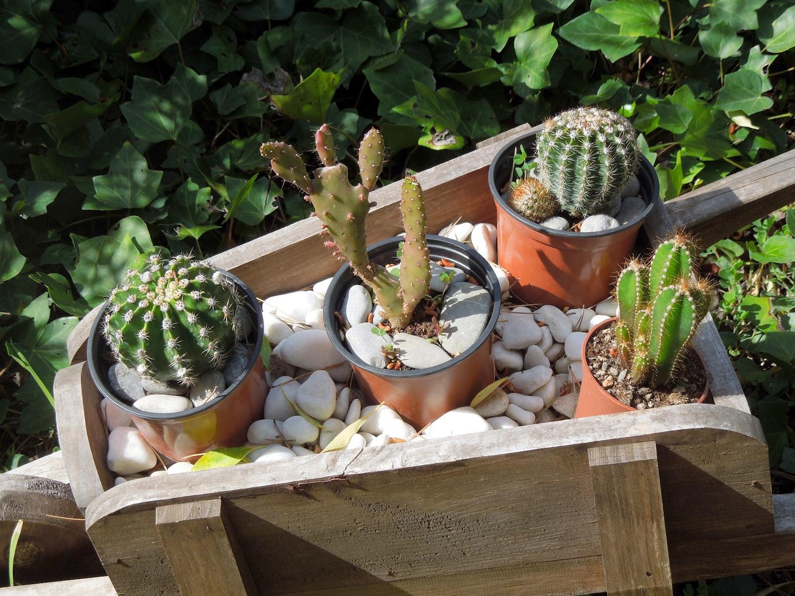 Carretilla de cactus bot nic serrat - Como decorar un estanque ...