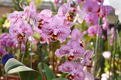 (Malaysia) - Penang Botanic Gardens
