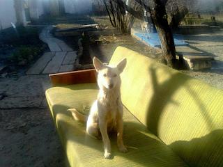 Собака сидящая на диване