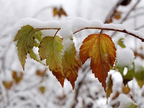 С наступлением зимы !