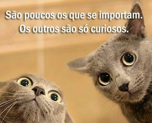 curiosos